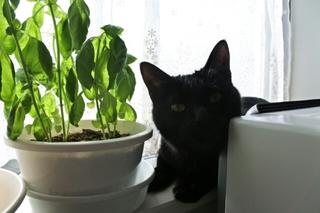 逆光と黒猫