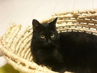 こっちを見る黒猫