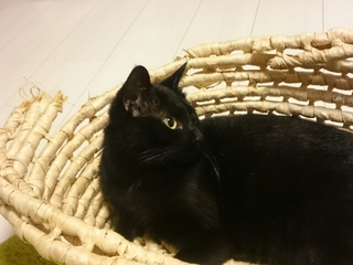 あっちを向く黒猫